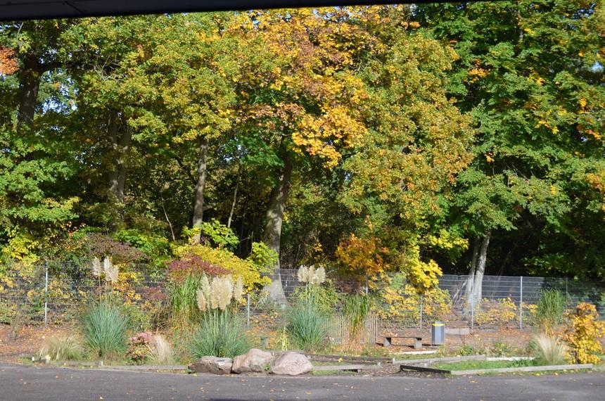 Herbst im Schulgarten